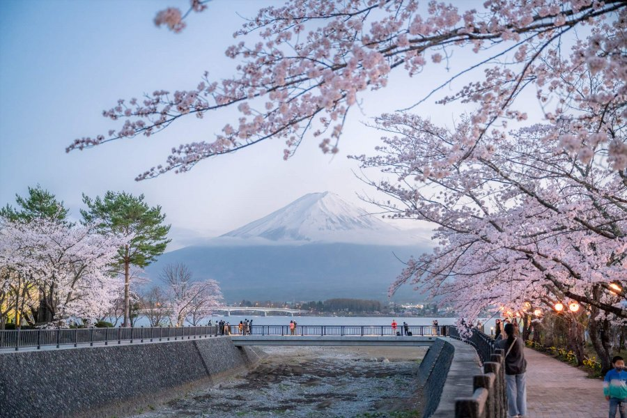 Sakura Festival in Kawaguchiko, Fuji! (From April 3, 2021 to April 11, 2021)
